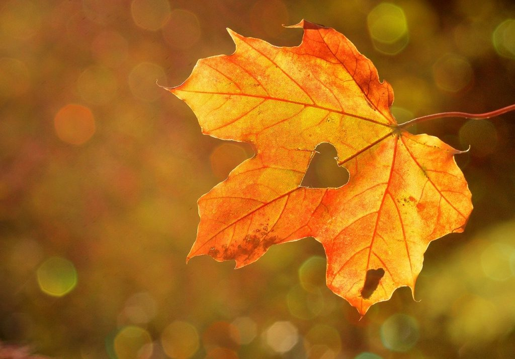 the best thing about autumn
